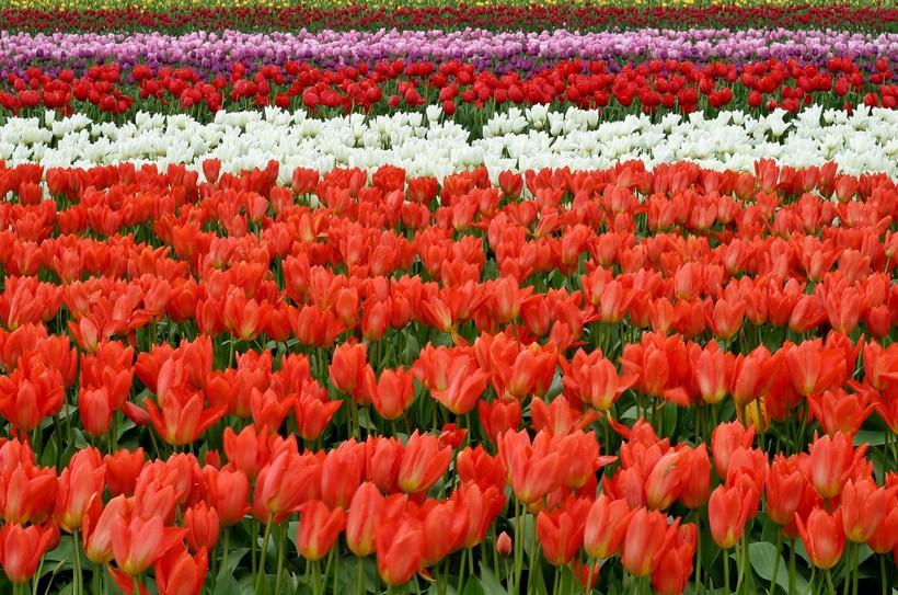 lips-flowers-fish-eye-red-66902.jpg?1486446410