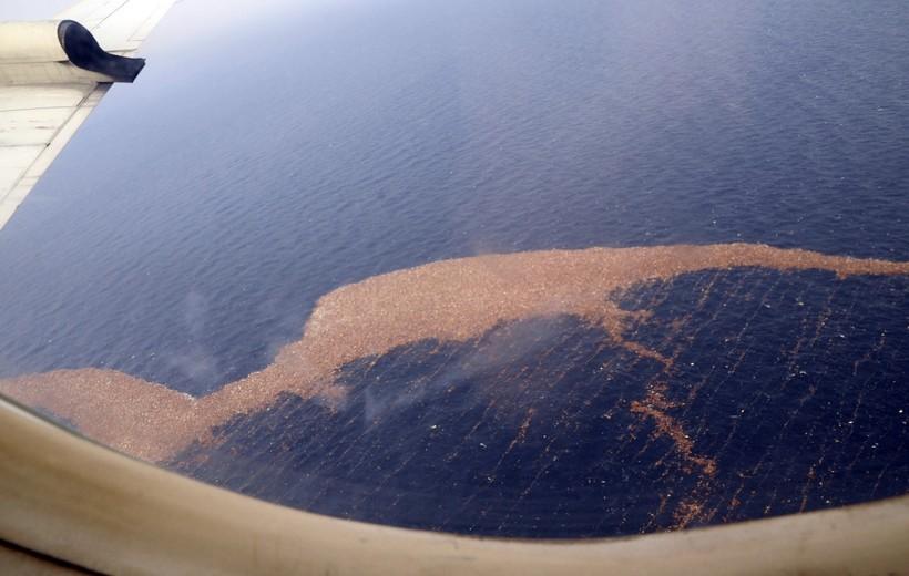 На фото: скопления мусора у берегов Японии
