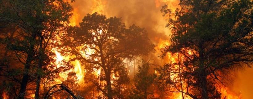 Почему эвкалиптам не страшны пожары