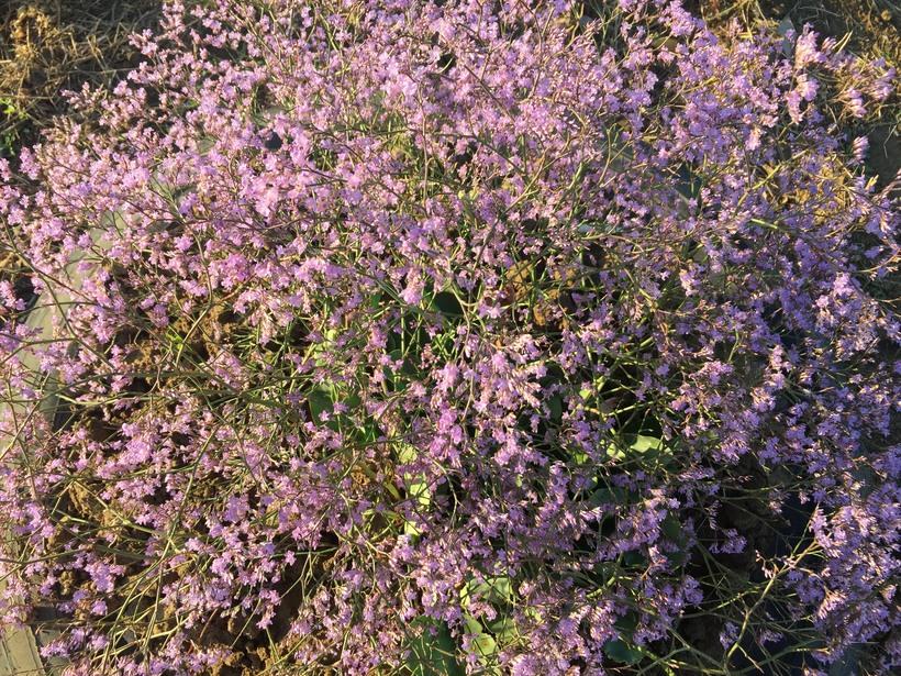 Южные дикорастущие цветы