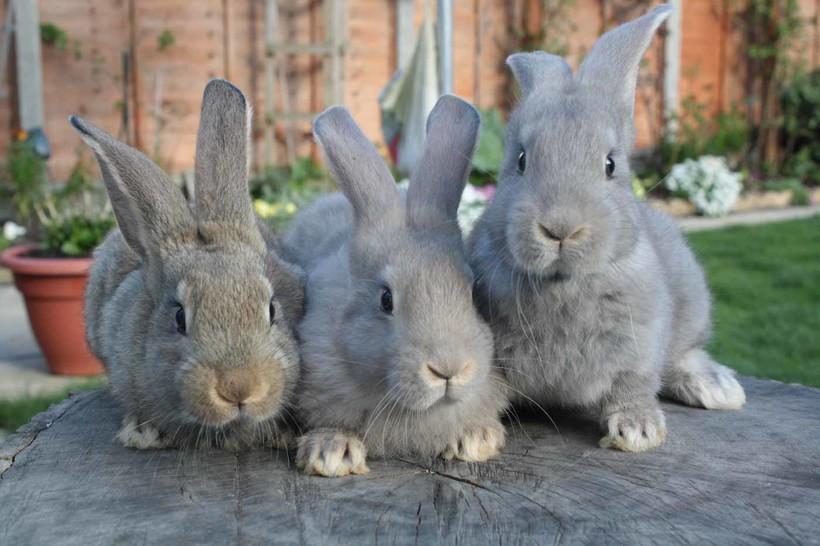 Совсем не одно и то же: чем зайцы отличаются от кроликов
