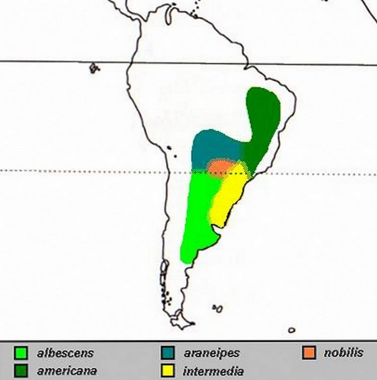 Ареал обитания обыкновенного нанду на территории Южной Америки