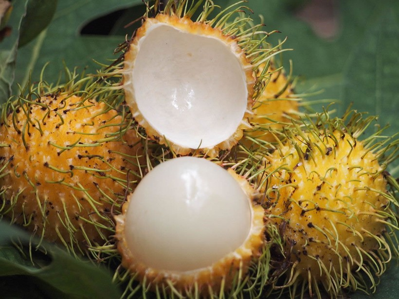 Рамбутан плоды