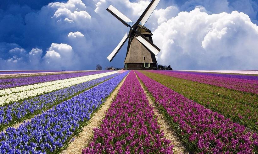 Цветочные поля, Нидерланды