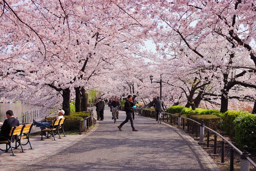 Парк Уэно. Япония. Апрель.