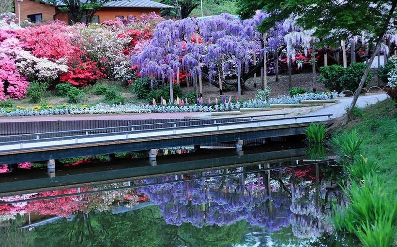 Парк Асикага в апреле.