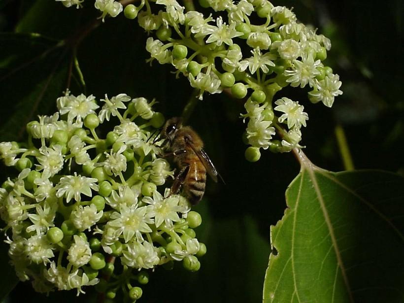 oregon_bestof2004_pollination_43906_o.jpg?1536768863