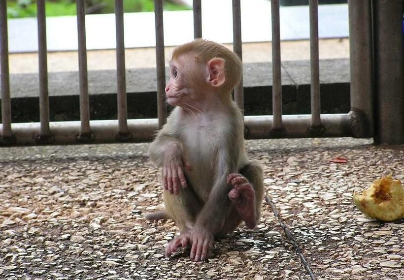 Милая обезьянка в питомнике
