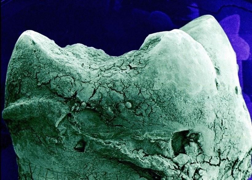 Как выглядят наши органы под микроскопом