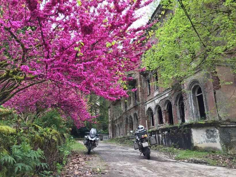 Цветущая Абхазия в апреле