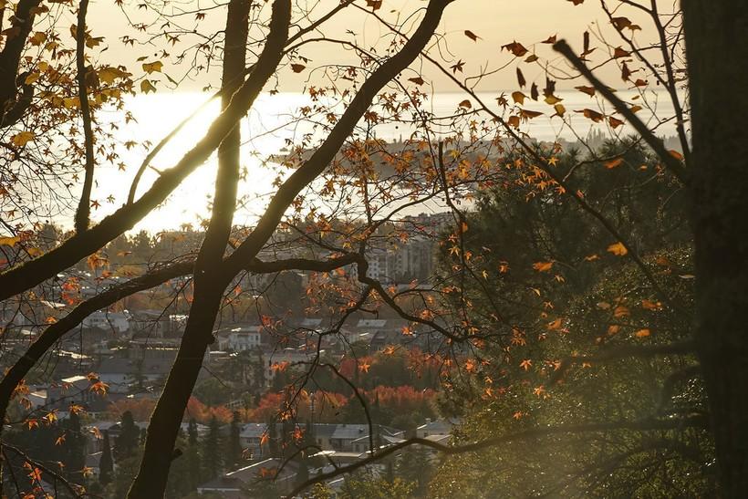 Ноябрь в Абхазии