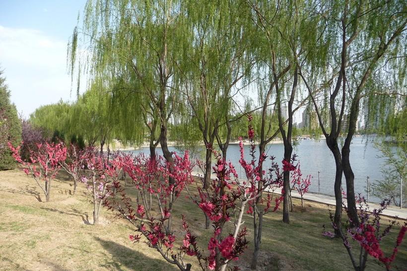Весна в парках Пекина, апрель 2018