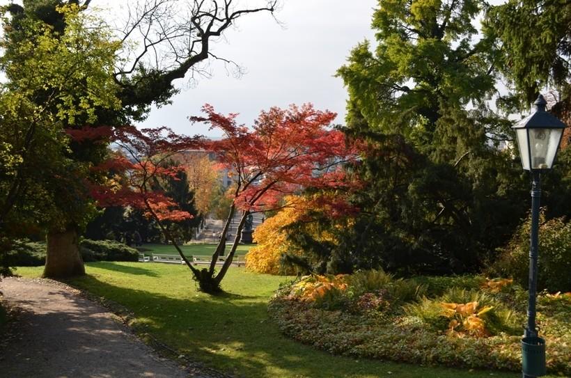 Парковые зоны в Вене осенью по-особенному красивы!