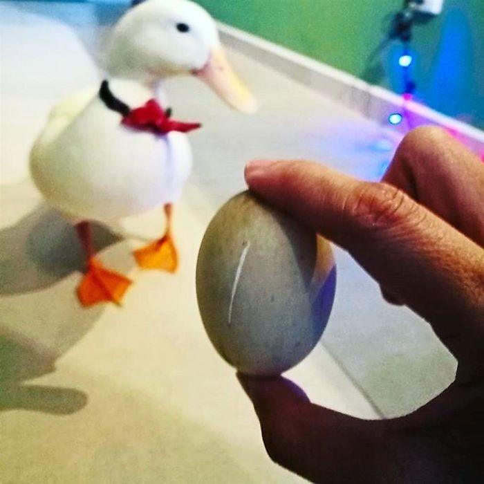 В Малайзии женщина купила яйцо балют в ресторане, и из него вылупился птенец