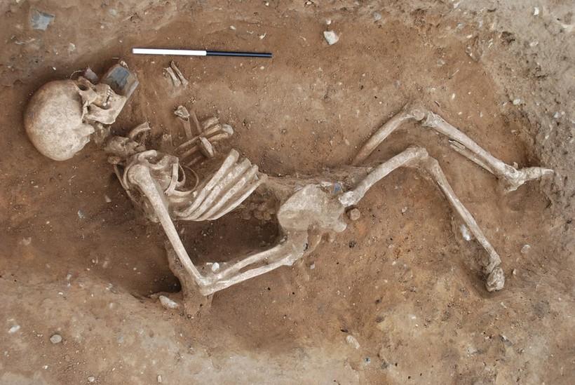 самый большой скелет в мире
