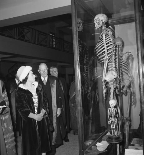 большой скелет