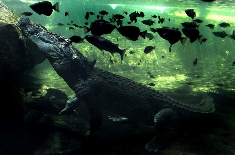Гельта Аршей: как посреди Сахары оказались нильские крокодилы