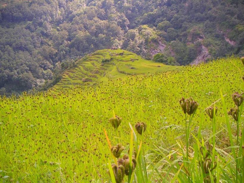 Красота парка Аннапурна