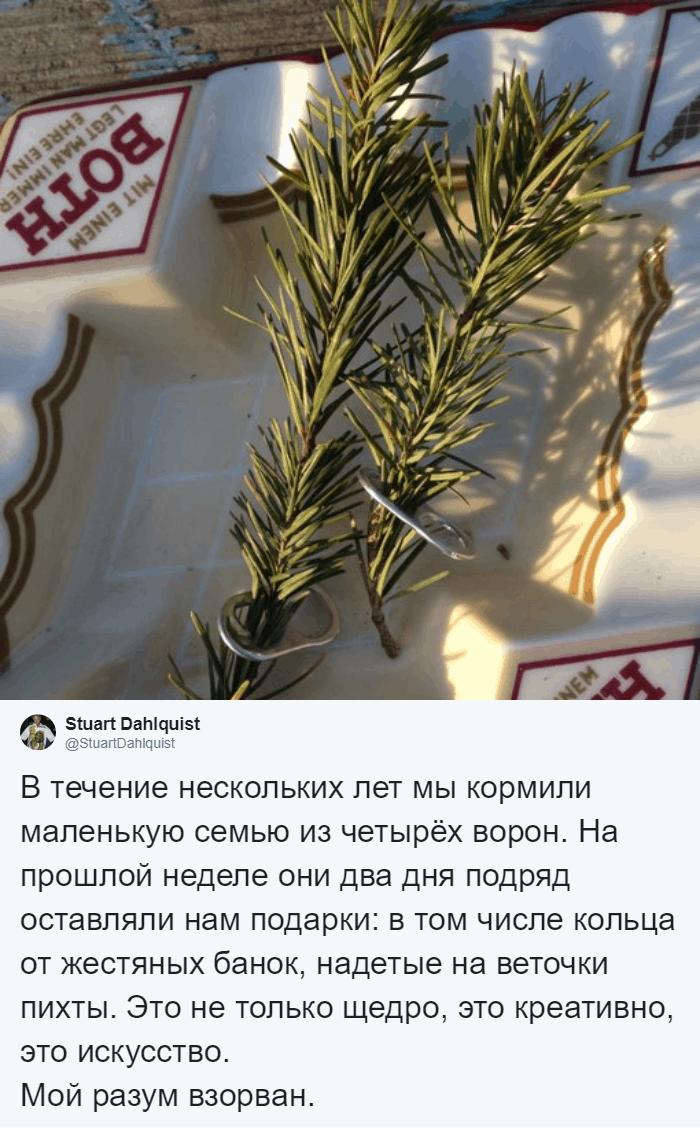 4 года мужчина кормил воронью семью, и однажды птицы сделали ему необычный подарок