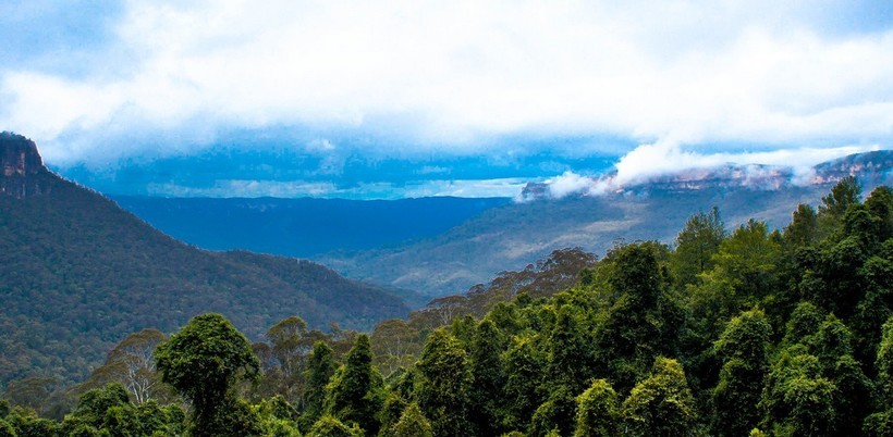 Эвкалиптовые леса горной системы