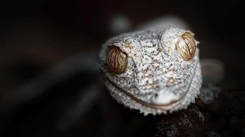 Необыкновенной красоты портреты эндемичных представителей дикой природы Мадагаскара