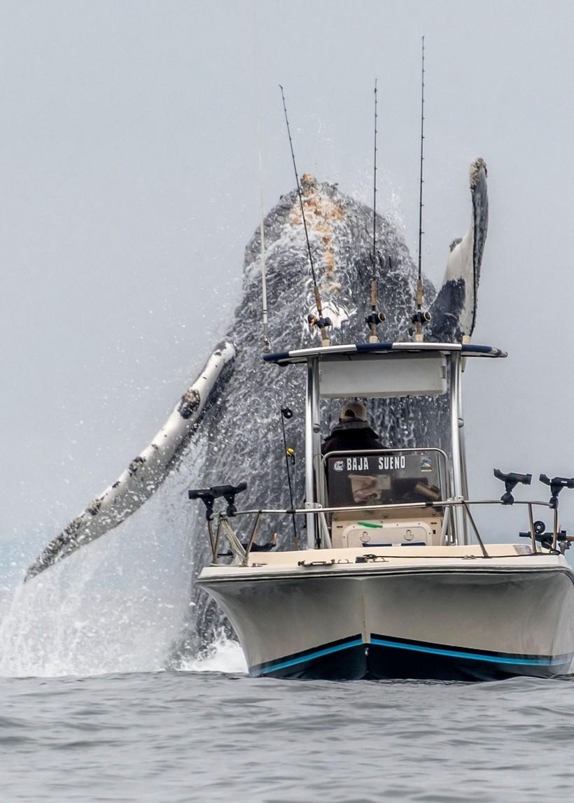 В сети появилось видео: гигантский кит выпрыгивает из воды возле рыбацкой лодки
