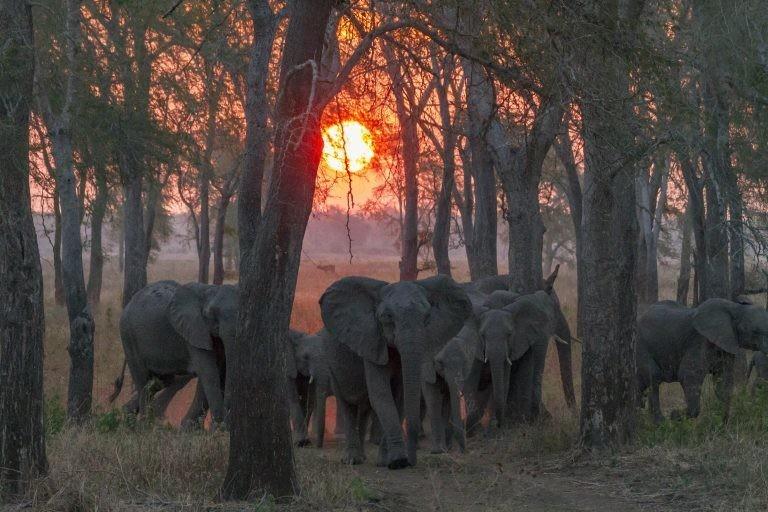 На что способна эволюция: слоны рожают детей без бивней, чтобы на них не охотились