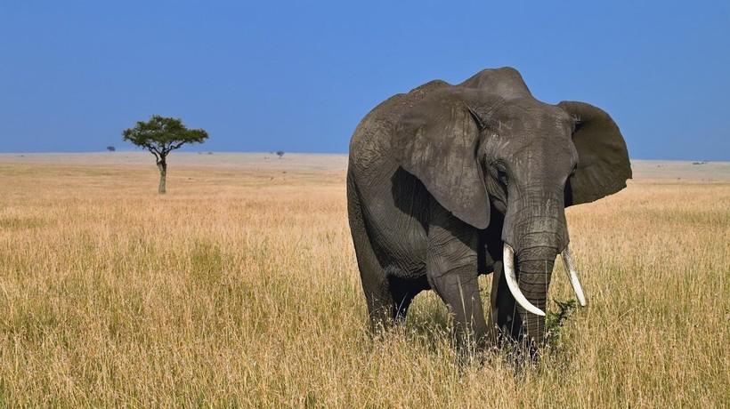 Крупным животным все тяжелее существовать на нашей планете, и их заменят более мелкие