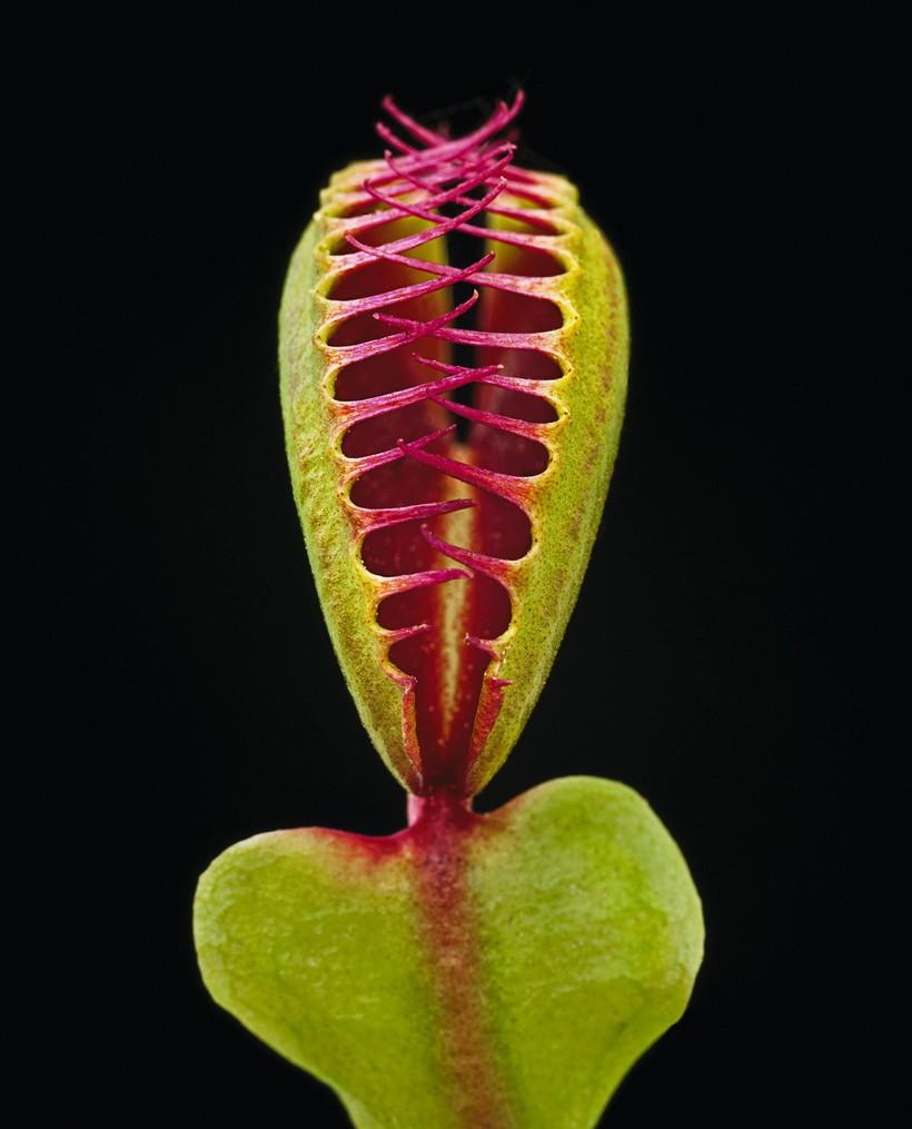 Поразительные детали необычных растений в уникальном фотопроекте Хелены Шмитц