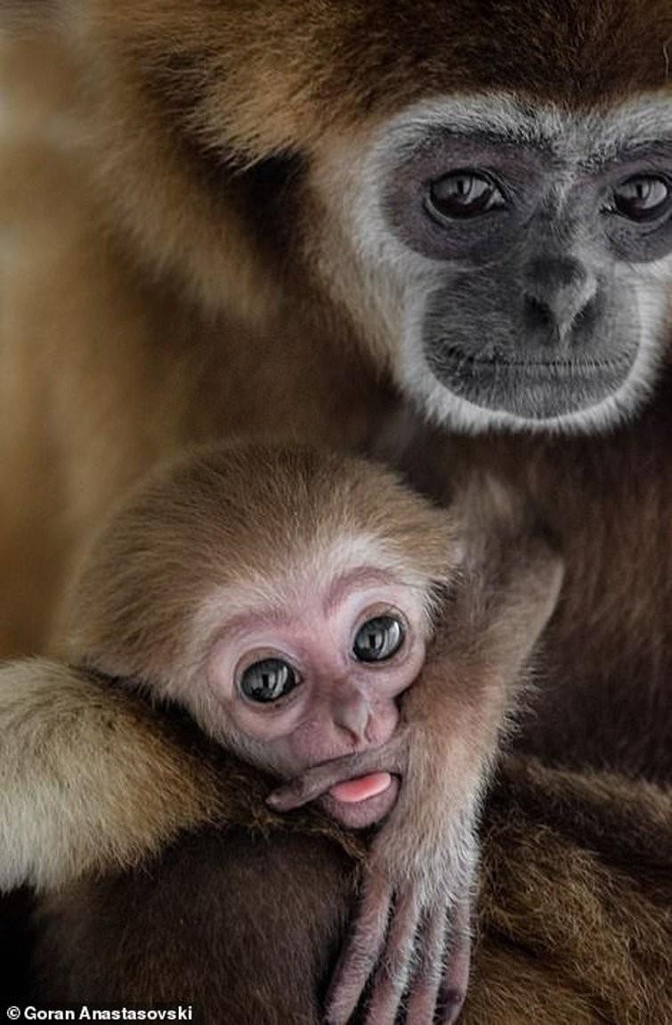 13 фото, демонстрирующих, что животные умеют любить не менее искренне, чем люди