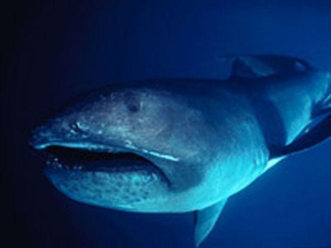 Монстры из глубин океана, которые развили сверхспособности