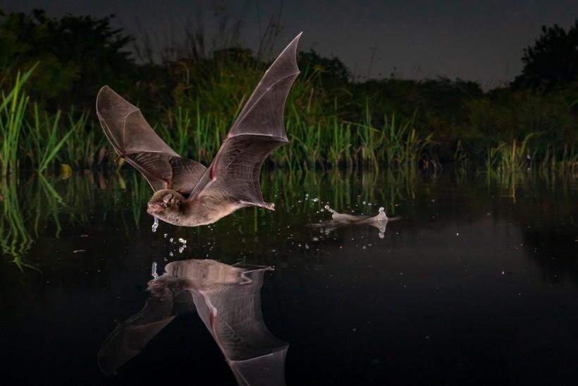Конкурс фотографии дикой природы показал работы финалистов 2020 года, и они бесподобны