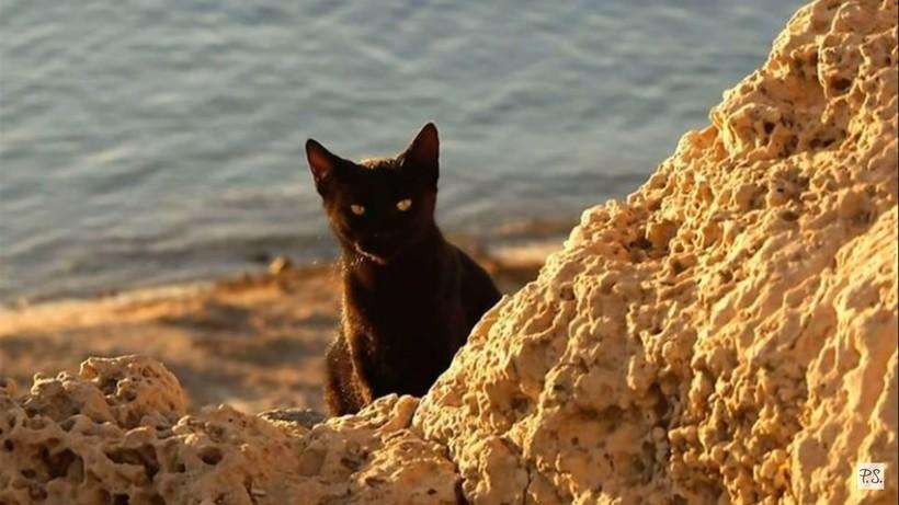 170 лет назад с корабля на остров сошли кошки, и сейчас, кроме них, здесь никого нет