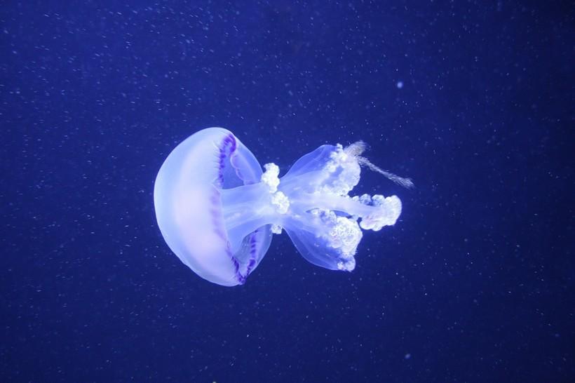 Медузы движутся очень необычно