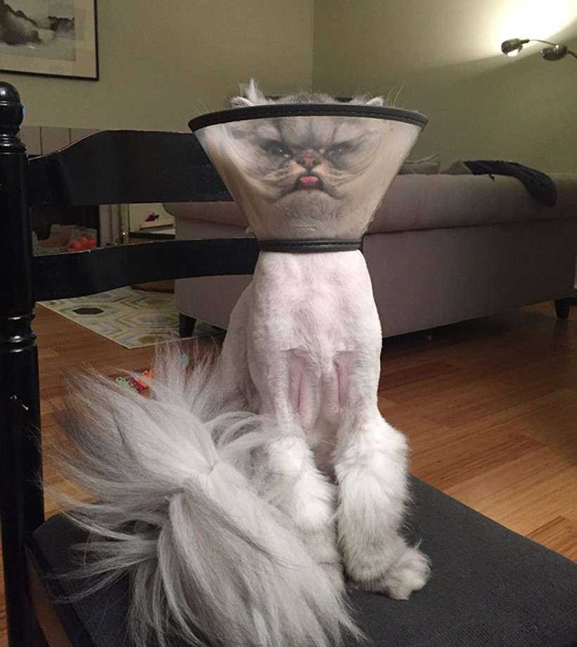 14 уморительных снимков самых нефотогеничных котов