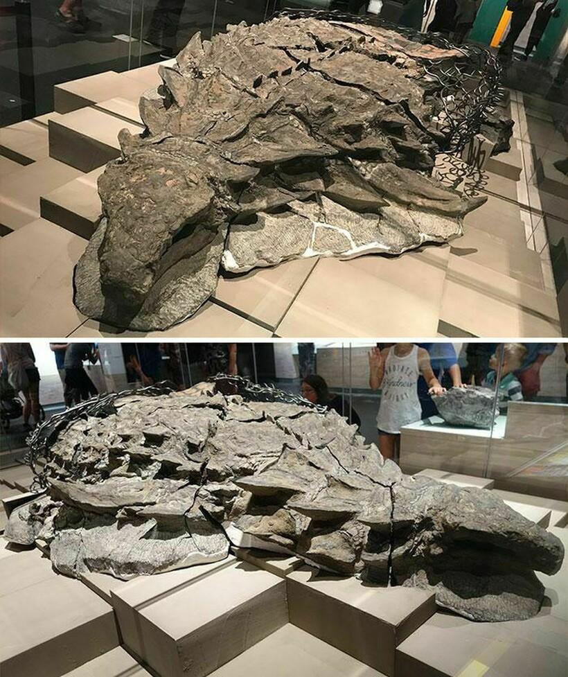 Самые впечатляющие окаменелости, которые когда-либо находили палеонтологи