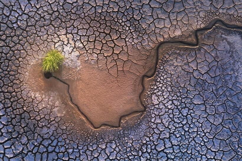 «Спрут», Калифорния, автор Шашанк Ханна