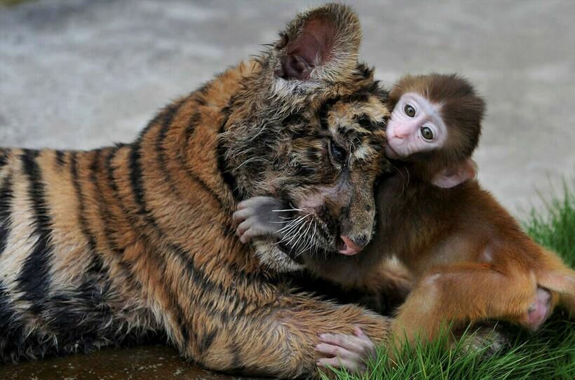 Как ни парадоксально, но даже хищники могут найти общий язык со своей пищей