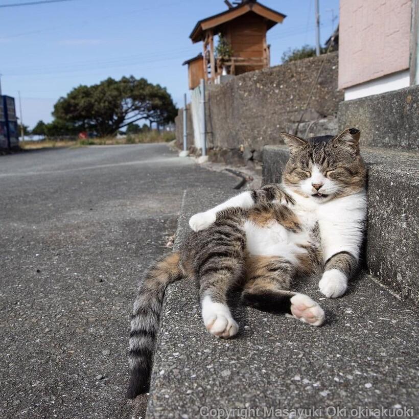 20 забавных фото бездомных кошек, на которых запечатлен их невероятный характер