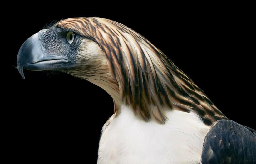 От героя Angry Birds до грифа: фотограф снимает птиц и рассказывает о проблемах видов