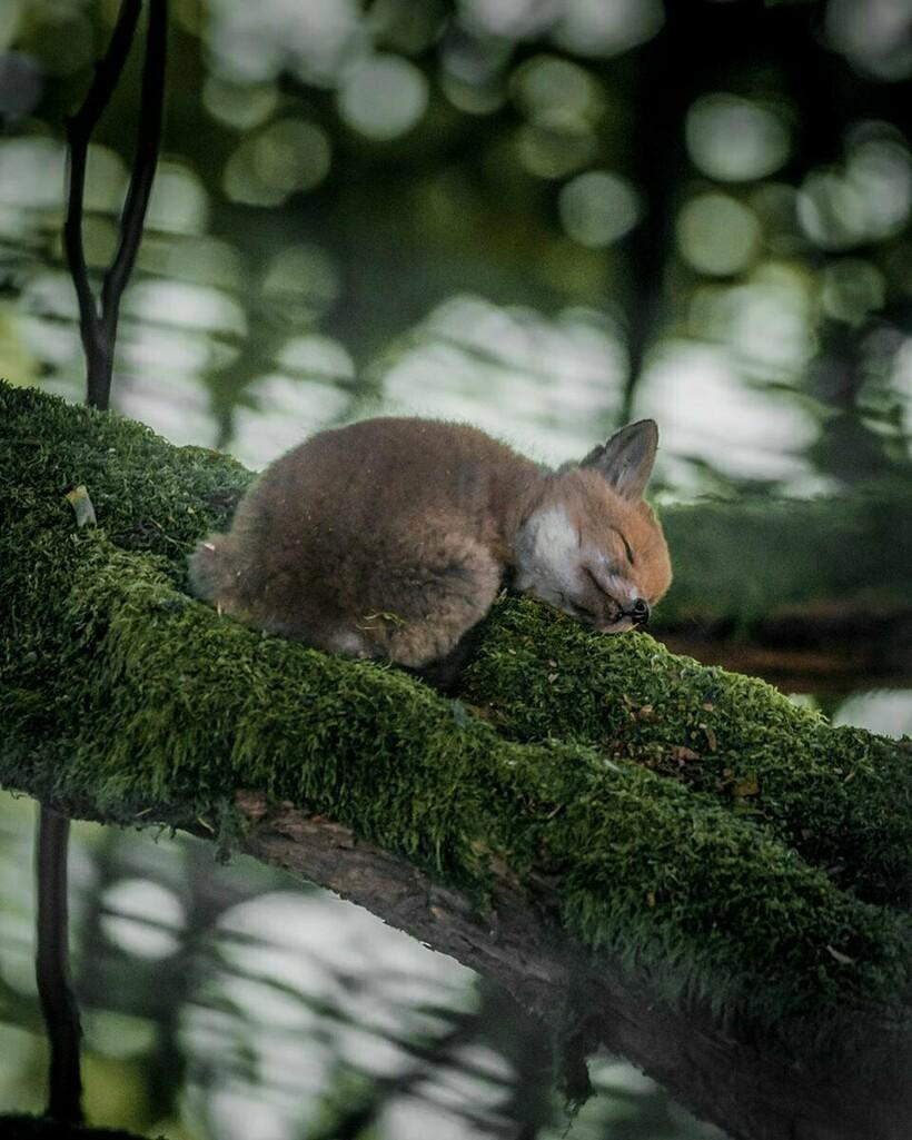 15 фотографий дикой природы, в которых застыл лучший момент