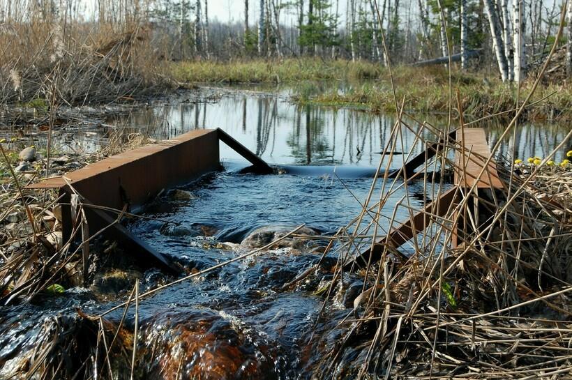 Старьковское болото