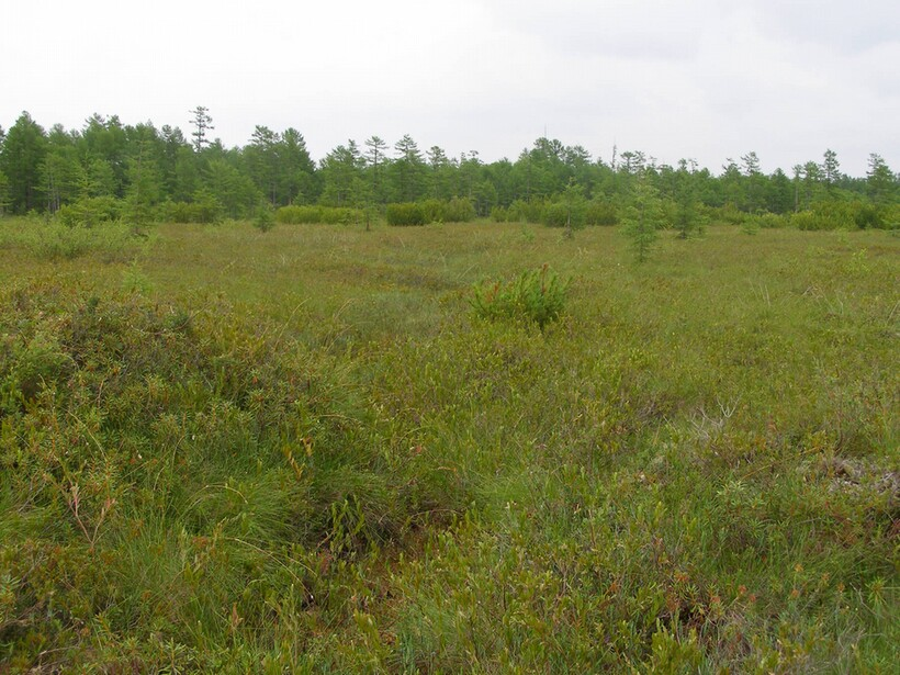 Тахтинское болото