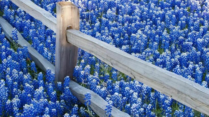 Несмотря на такую популярность синего, именно зеленый цвет хуже всего поглощается растениями