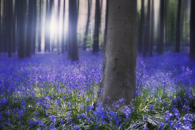 Сегодня синий цвет встречается в природе гораздо чаще