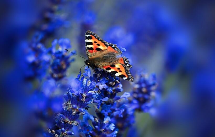 Синие растения опыляют чаще