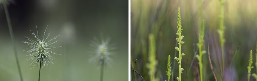 Цветы, которые начали расти на территории