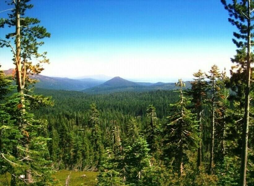 Леса Национального парка «Лассен-Вулканик»