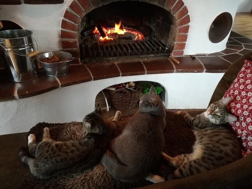 Еда на огне и 8 градусов тепла: девушка поделилась, каково жить в замке в наши дни
