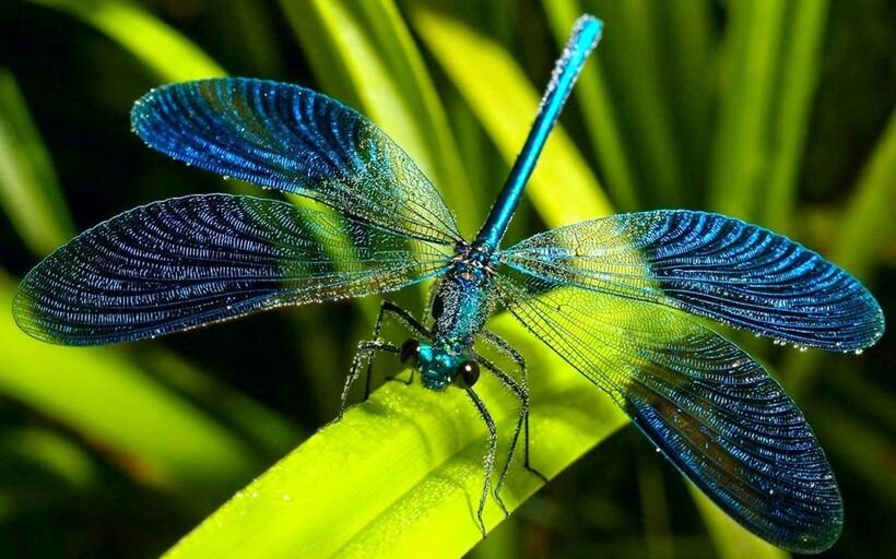 Если у стрекозы повредится нервная система, она не сможет остановить полет и будет летать и летать